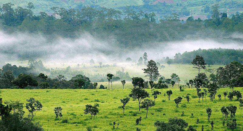 ป่าเมืองไทย